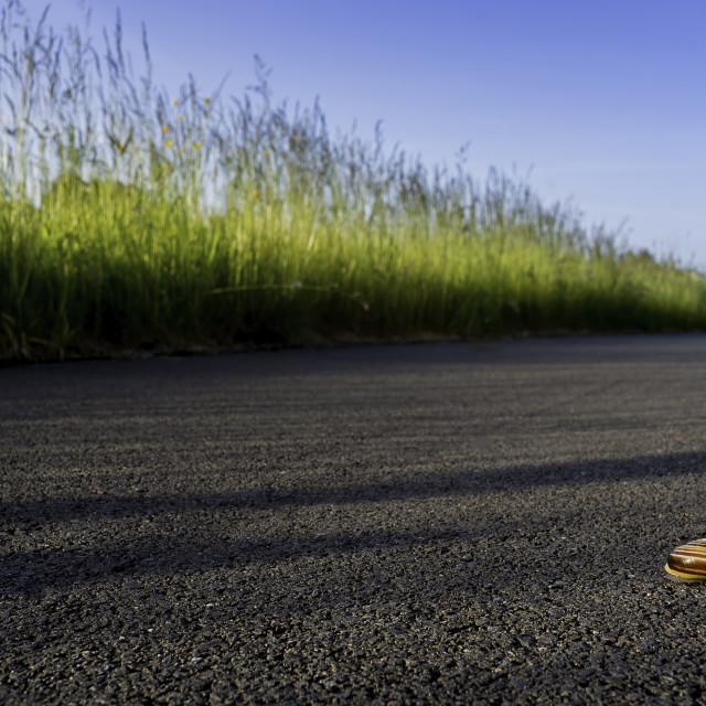 """White Lipped Snail on tarmac pavement"" stock image"