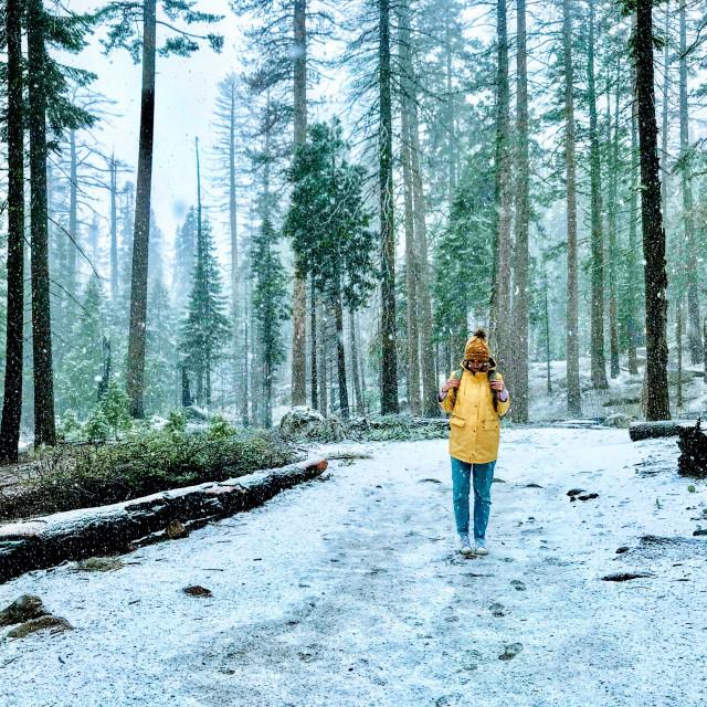"""""""Yosemite Yellow"""" stock image"""