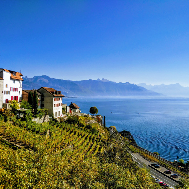 """Lavaux vineyards"" stock image"