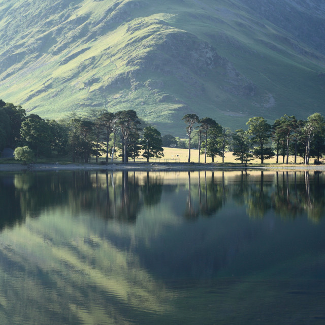 """""""Buttermere Trees"""" stock image"""