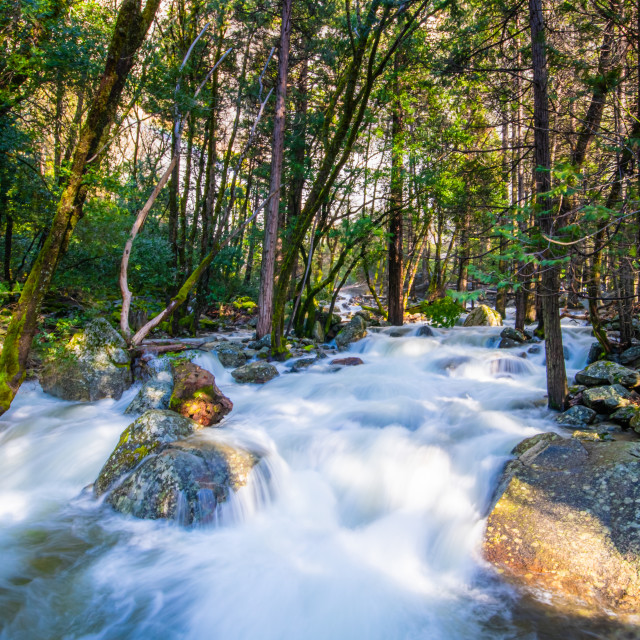 """Water rushes down a stream in a forest in Yosemite National Park"" stock image"
