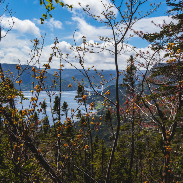 """""""Bonne Bay Through the Leaves"""" stock image"""