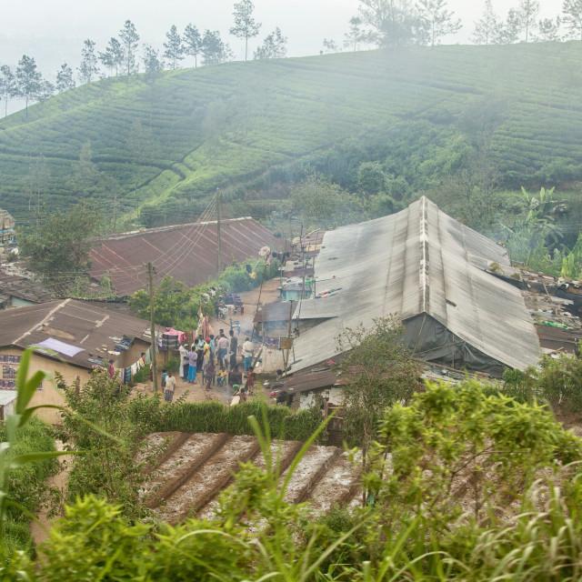 """People gathering in village in the Highlands in Sri Lanka"" stock image"