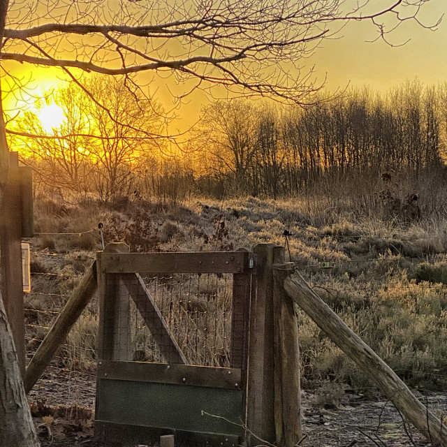 """""""Sheep fence at heather in winter"""" stock image"""