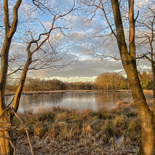 """""""Sunrise view on pond in winter"""" stock image"""