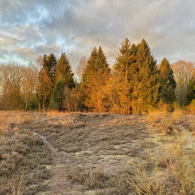 """Winter scene on the heath"" stock image"