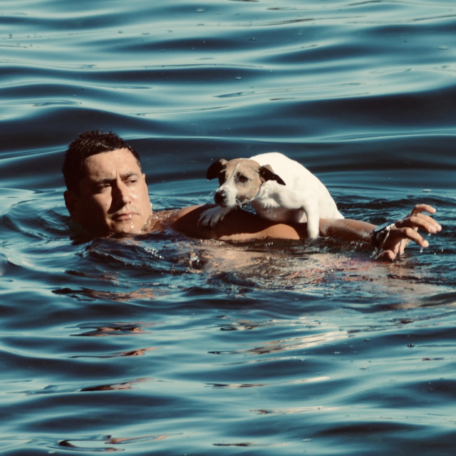 """""""Man swimming with dog"""" stock image"""