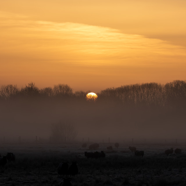 """Sunrise through the Mist"" stock image"