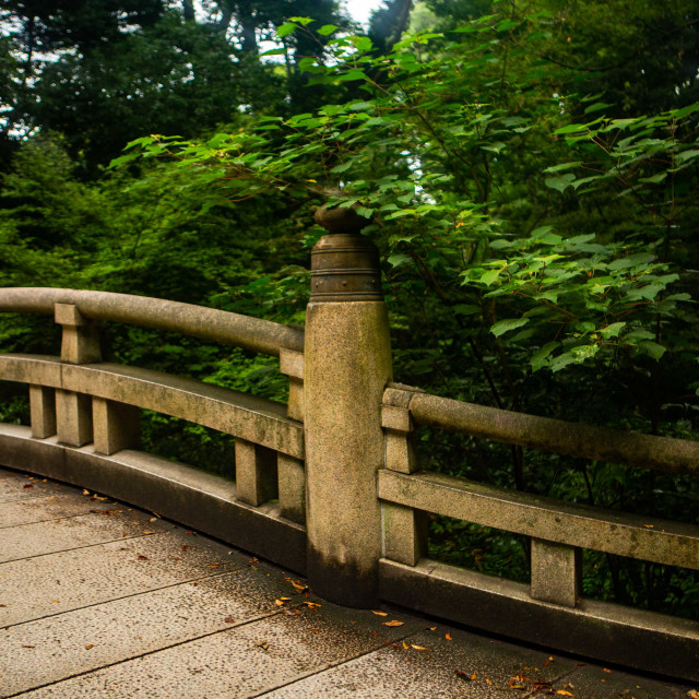 """""""Pathway through the Sacred Forest"""" stock image"""