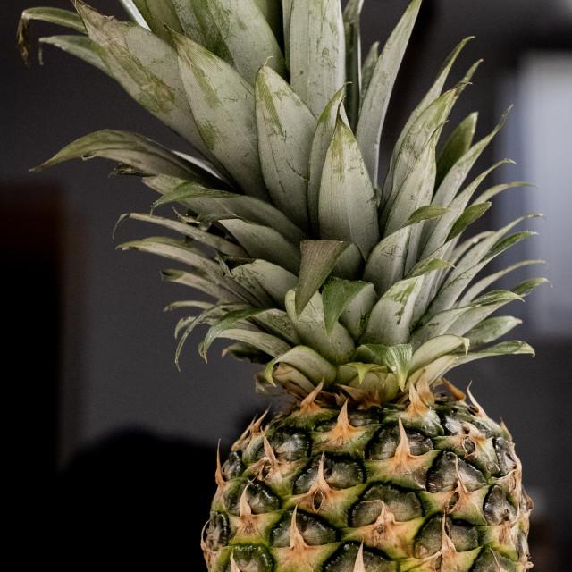 """Pineapple"" stock image"