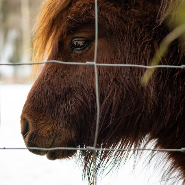 """""""Pony"""" stock image"""
