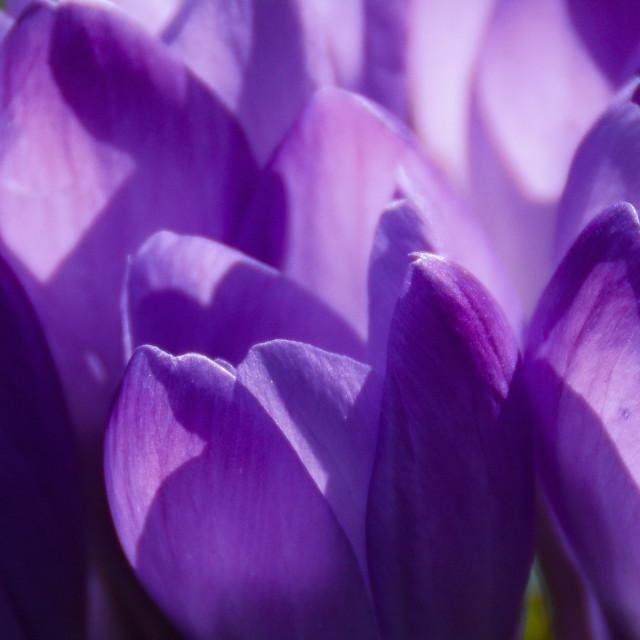 """Softness of spring"" stock image"