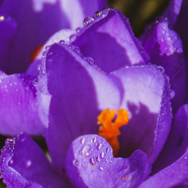 """Purple & orange"" stock image"