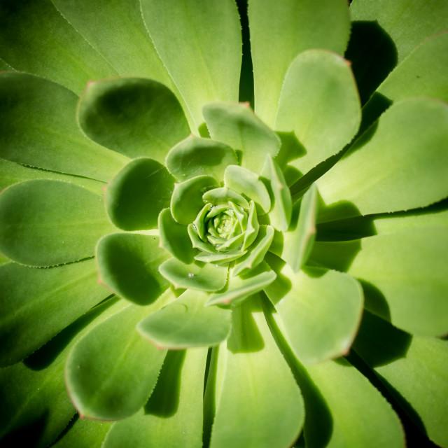 """Fibonacci"" stock image"