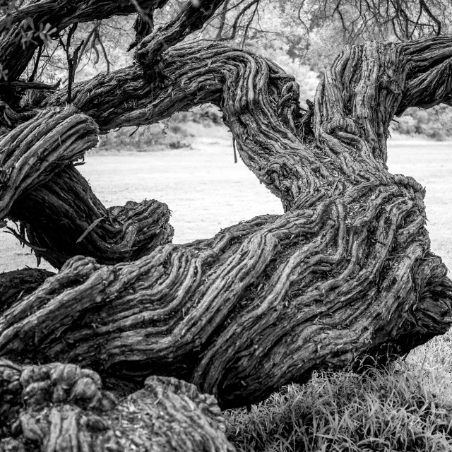 """Wrung tree"" stock image"