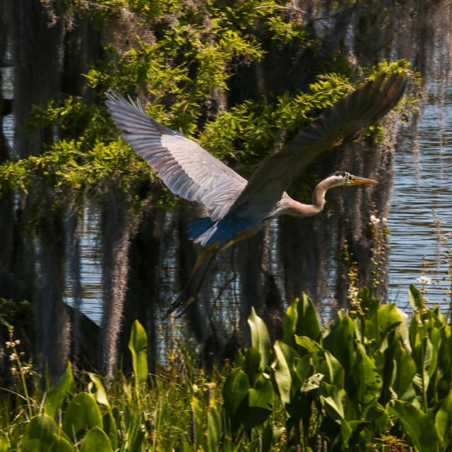 """An Oasis For Wild Birds Leesburg Florida"" stock image"