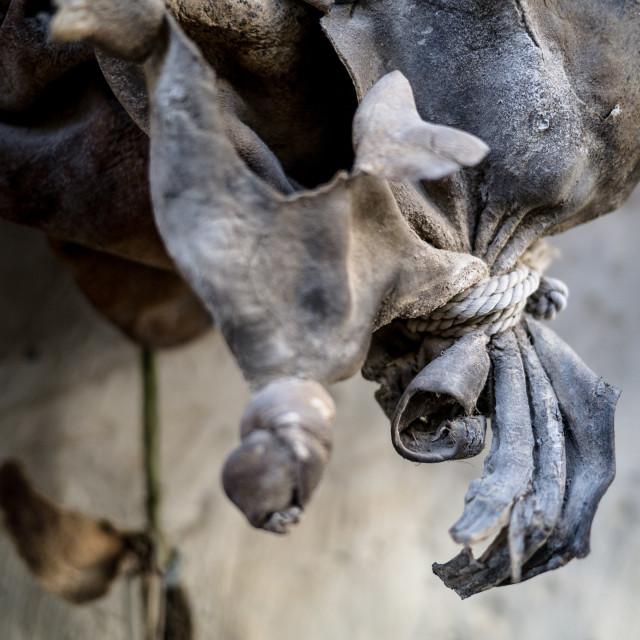 """""""Camel skin water bag"""" stock image"""