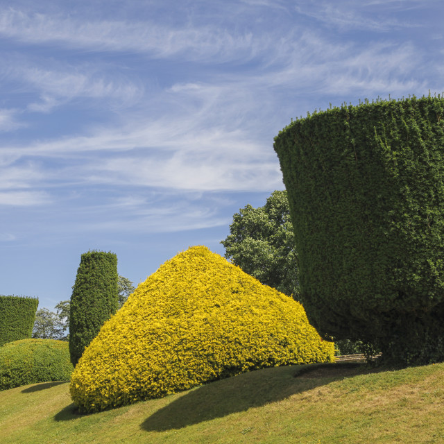 """Buxus trees"" stock image"