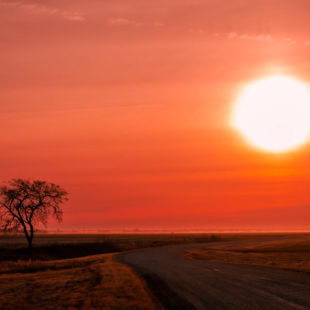 """Lone tree and sunrise"" stock image"