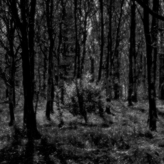"""Glistening Bush - Savernake Forest, Wiltshire, England"" stock image"