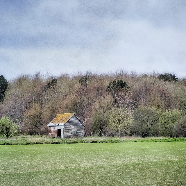 """""""Old Shed Amongst The Ring Of Trees"""" stock image"""
