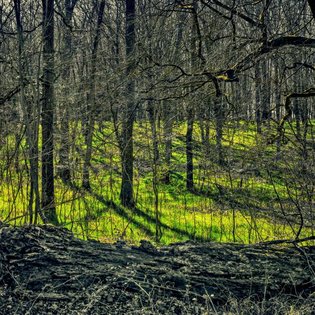 """Forest Blanket - Savernake Forest, Wiltshire, England"" stock image"