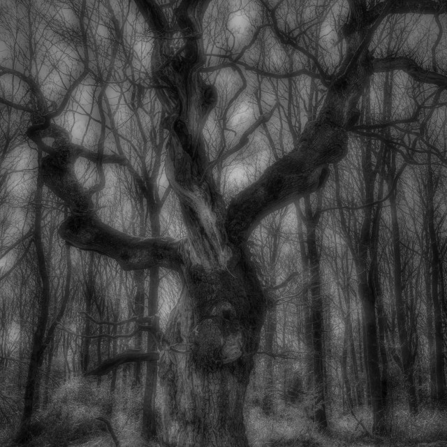"""""""Spooky Tree - Savernake Forest, Wiltshire, England"""" stock image"""