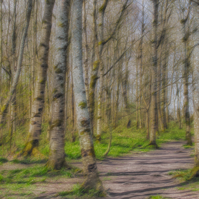 """""""Oakfrith Woods - Urchfont, Wiltshire, England"""" stock image"""