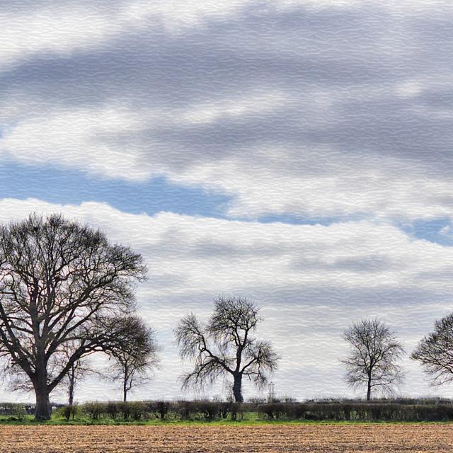"""Tree Silhouettes"" stock image"