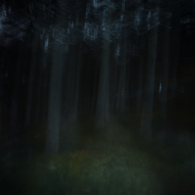 """a forest"" stock image"