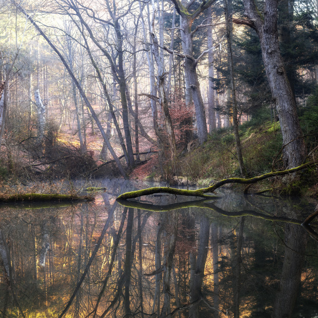 """""""Forest pool"""" stock image"""