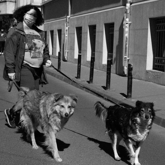 """""""Walking dogs"""" stock image"""