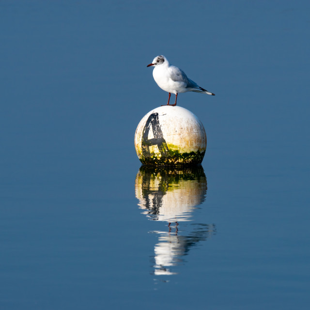 """""""Seagull perched on a buoy"""" stock image"""
