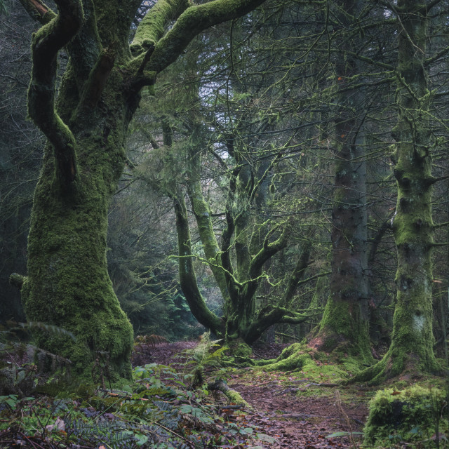 """""""Into the Gnarly Wood"""" stock image"""