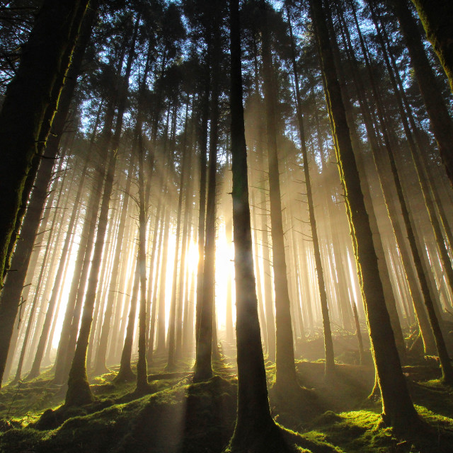 """""""The Forest of light"""" stock image"""