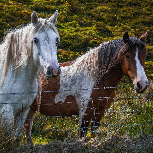 """""""The Horses"""" stock image"""