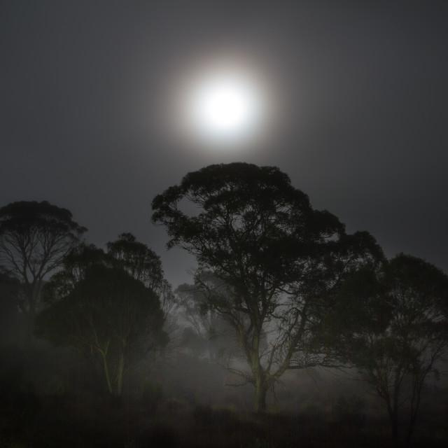 """Lunar Dawn"" stock image"