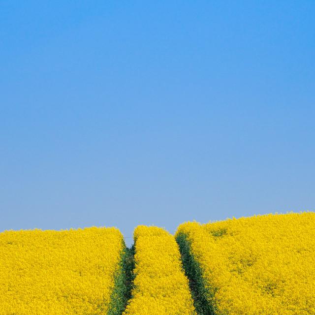 """Blue Sky Day"" stock image"