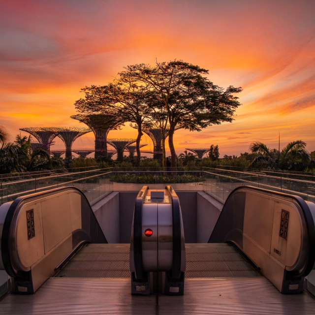 """""""Sunrise at Gardens by the Bay"""" stock image"""