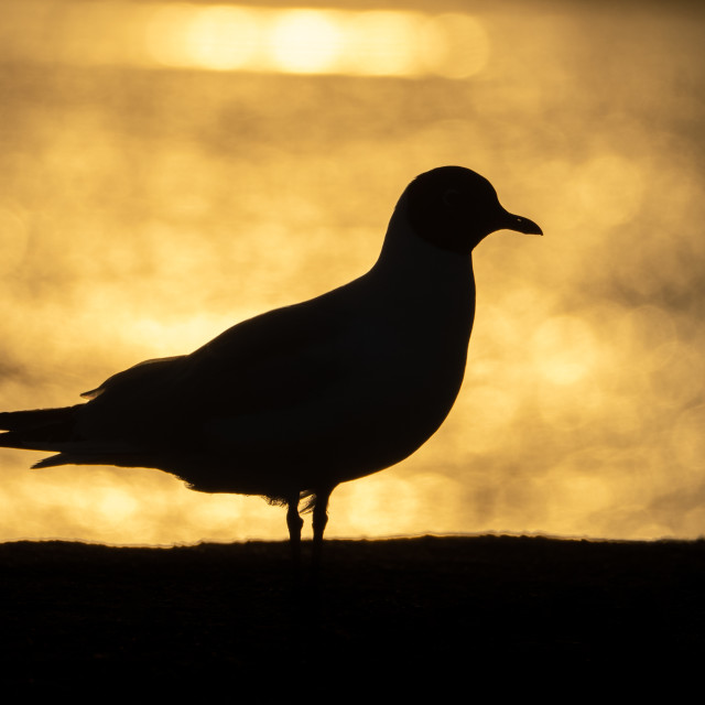 """Seagull."" stock image"