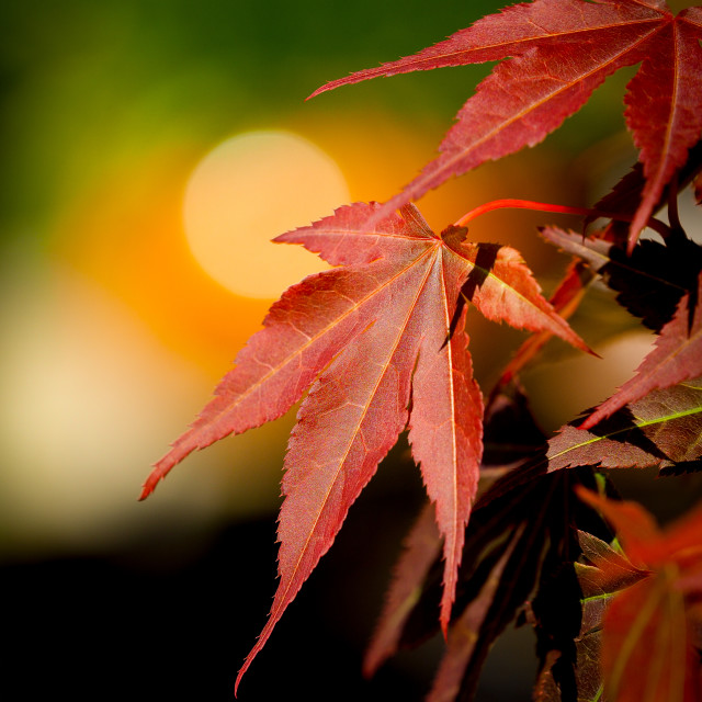 """""""Autumn colour in Spring"""" stock image"""