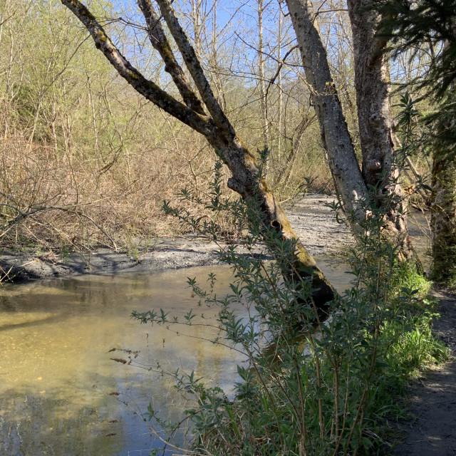 """""""River at Sedro-Wooley #3"""" stock image"""