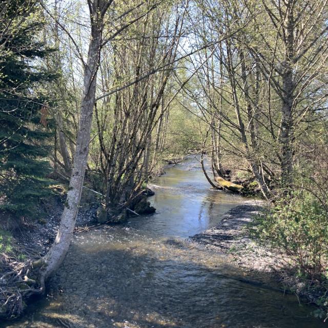"""""""River at Sedro Wooley #1"""" stock image"""