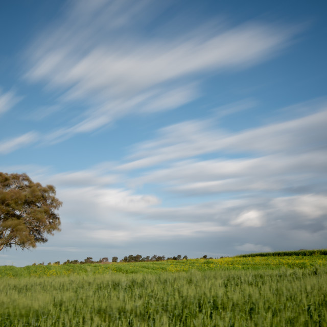 """""""Lonely tree in the green agriculture field and moving clouds. Longexposure landscape"""" stock image"""