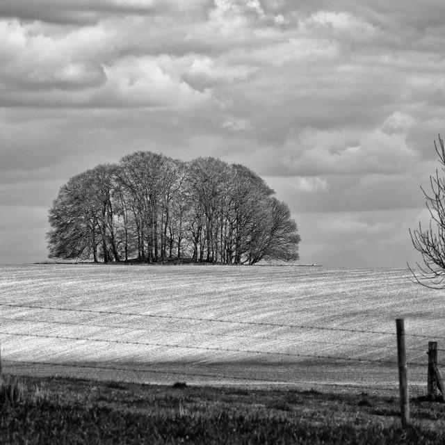 """Sunlit Copse - Black & White"" stock image"