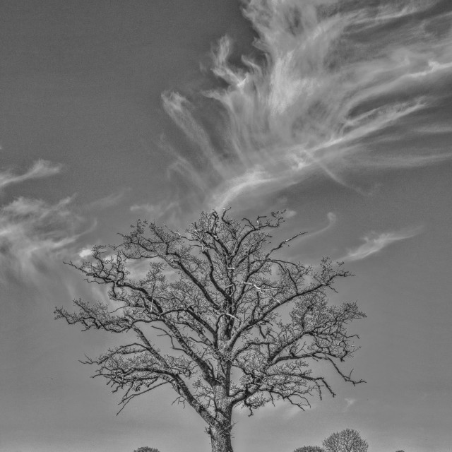 """""""Smoking Tree"""" stock image"""