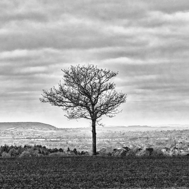 """Lone Tree - Potterne Fields, Devizes, Wiltshire"" stock image"
