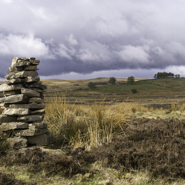 """""""Lamb Hill, Cotherstone Moor, Teesdale"""" stock image"""
