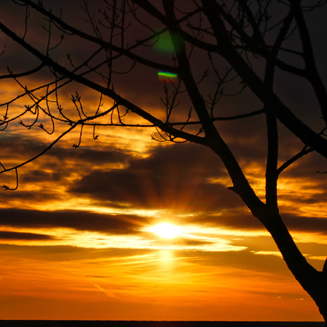 """""""Setting Sun with Tree Silhouette"""" stock image"""