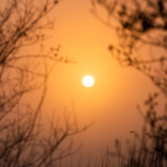 """Sun peering through the trees"" stock image"